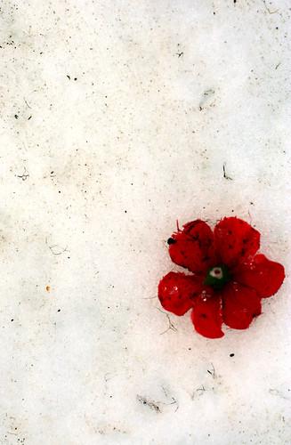 Snow Silk