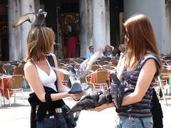 聖馬可廣場餵鴿子_010
