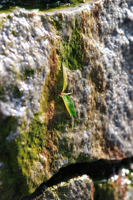 石壁のアクセント