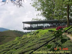 boh - sg palas09 tea centre2