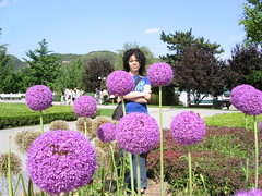 Beijing Botanical Garden - Angela and Purple Flowers