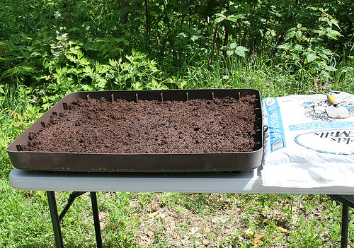 lettuce plot 4