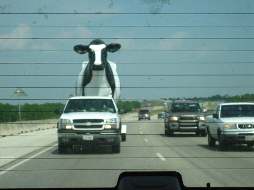 The giant cow bears down on us