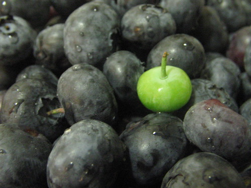 Greenberry among Blueberries