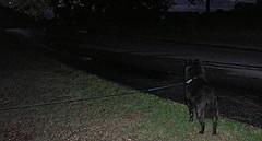 6/20/06: Black Dog, Road