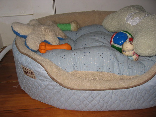 Moxie's New Bed!