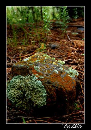 fungus on rock