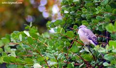 Burung yang kedinginan