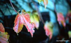 Leaf photo by Rafakoy