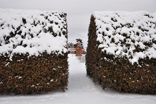 Hedge opening