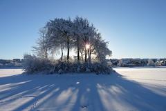 Snow day photo by FizzixIsFun