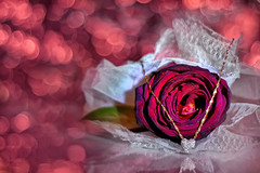 Rose for you photo by grazanna