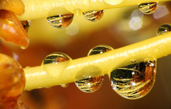Drops photo by LSydney