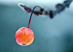 Winter fruit photo by Zed.Cat