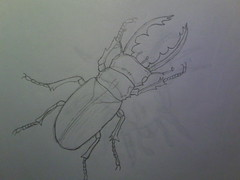 Stag Beetle Drawing photo by boxpleat