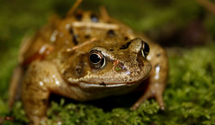 First Frog photo by erikpaterson