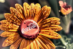 Enjoy:  The Mexican Coca~Cola Flower photo by hbmike2000