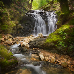 Return to Uvas Canyon photo by PrevailingConditions