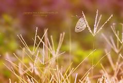 روح مشرقة || Spirit is shining photo by mzna al.khaled