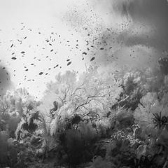 Liquid Garden photo by Hengki Koentjoro