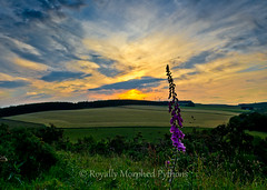 Sunset near Huntly, Scotland photo by Royally Morphed Pythons