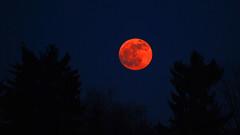 Luna roja photo by Valter49