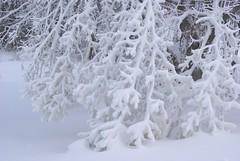 December 13, 2010 Holy SNOW!!! 131