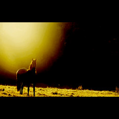 golden horse dream photo by ♦ Peter & Ute Grahlmann ♦