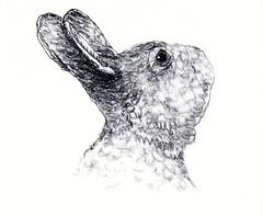 Rabbit photo by Ken Mat