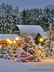Christmas Tree Farm ... open! photo by Ken Scott