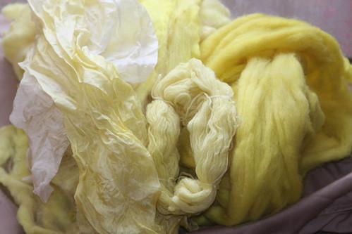 Weld - Natural Dye