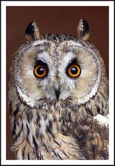 Owl photo by Fazer44