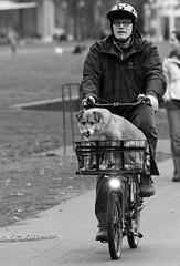 A Saturday Ride photo by Ian Sane