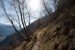 Am Partschinser Höhenweg