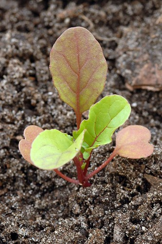 Seedlings 2011
