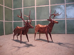 Roosevelt Elk and White Tailed Deer photo by EyeRock`s Origami