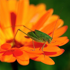 photo macro au carrée nature & insecte / le regard d'un soir photo by BOILLON CHRISTOPHE