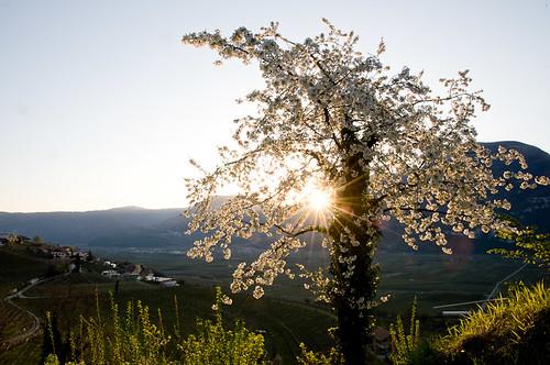 Sonnenaufgang am Weinlehrpfad