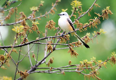 Tulsa Bird photo by 熊.陈美芬.Phan Ly Photography.On/Off