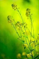 Yellow Dream photo by shinichiro*