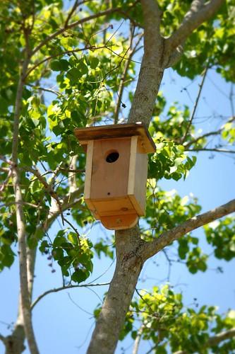 New Bird Houses Up