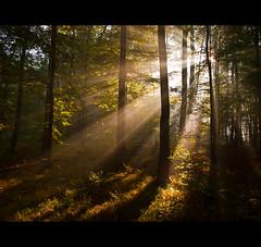 forest light photo by Maximilian Zimmermann