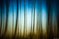 Tree Abstract photo by Alban Henderyckx