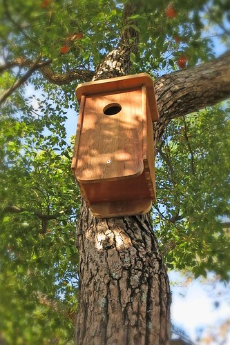 Two New Bird Houses
