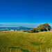 Mount Eden panorama_3