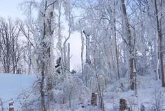 December 13, 2010 Holy SNOW!!! 065
