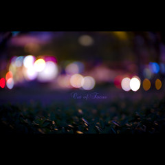 105/365 Out of Focus photo by brandonhuang