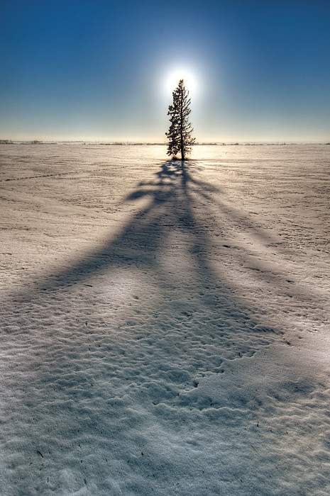 Lone Pine And Shadow