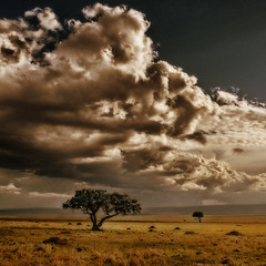 Sky above Masai Mara photo by regina_austria