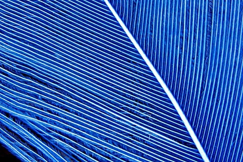 Blue Feather, Boulder